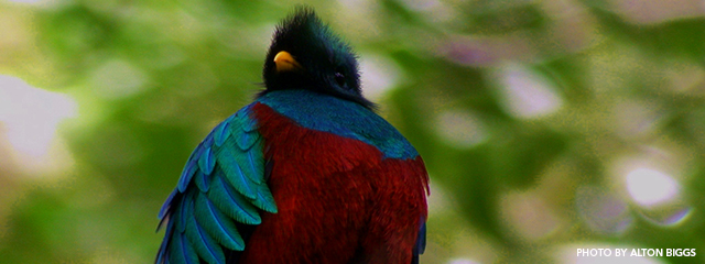 The Divinity of the Resplendent Quetzal | Holbrook Travel