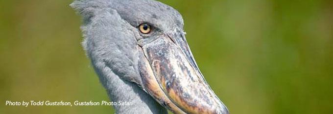 7 Scary Bird Species | Holbrook Travel