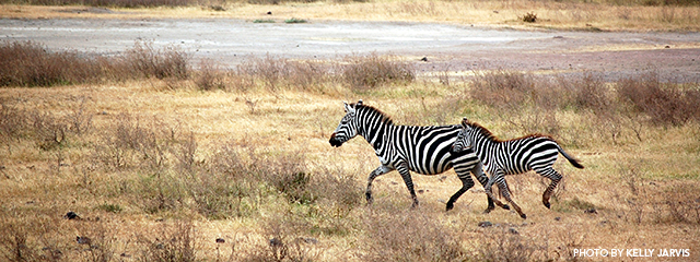 Books To Read Before You Travel To Tanzania Holbrook Travel