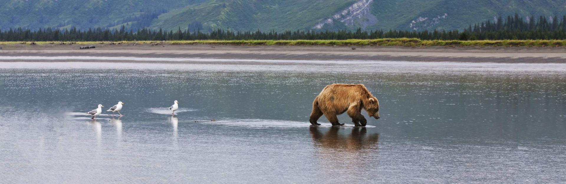 National Geographic Tours >> Alaska | Holbrook Travel