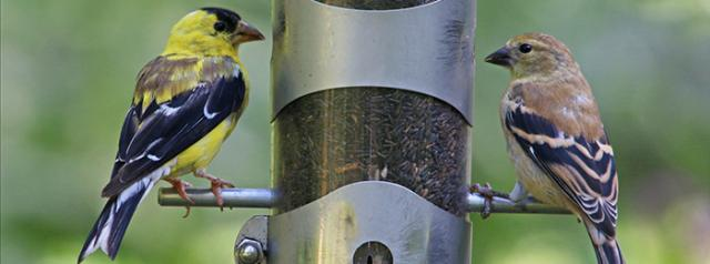 The 2018 Great Backyard Bird Count | Holbrook Travel